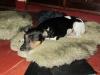 Perita loves sheepskin
