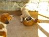 Dogs of Perge pansiyon