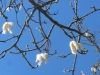European spring