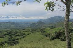 Colombian coffee hills