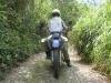 Jungle road up to Coroico