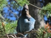 Pretty birdie @Yosemite
